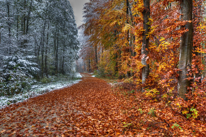 """Fresh Snow on Germany's Back Roads<br /> On our tour through Germany on the """"Romantic Road"""" trip, I found myself wanting to get as far off the beaten path as possible, so we would veer onto dirt farm roads and drive through the blazing colors of autumn. When the snow started coming down, it set a whole different mood. The mix between fall and winter was quite exuberating.   I would walk the snowy roads, shooting at every turn, while my wife drove in the car, following behind. She didn't get out of the woods without getting a few snowballs thrown her way!<br /> <br /> What I found interesting about this photo, was two separate scenes stuck side-by-side. Winter on the left, Autumn on the right. Crazy!"""