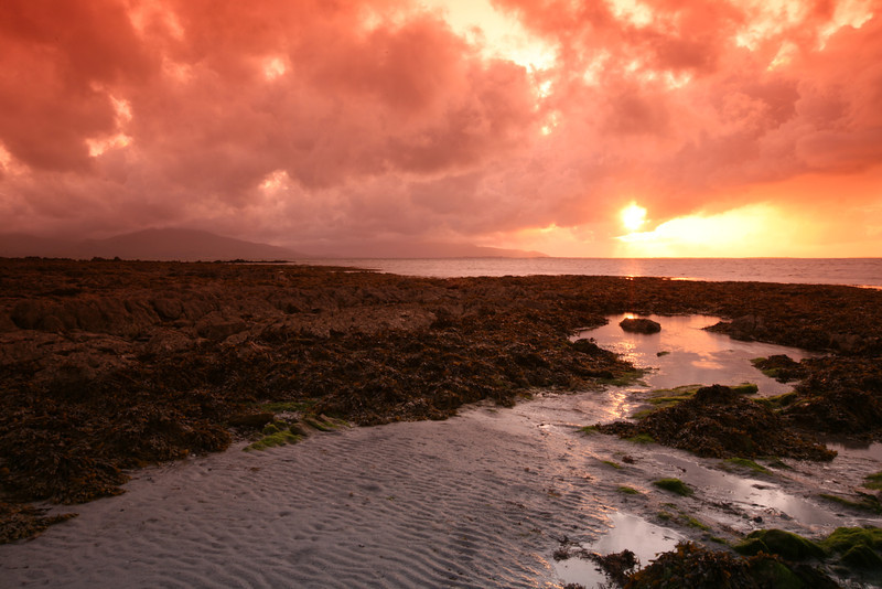 Irish Sunset over Seaweed Bed<br /> It was tricky wandering off in the evening into this rocky seaweed bed. Tide had just gone out and everything was slimey and slippery. But crazy me, I had to find a better spot, so I went out into this wet wonderland, trying to catch the sunset with reflections from the tide pools. As it got darker, trekking back with deep cervasses everywhere, kinda gave me the heebie-jeebie's. If I fell into one of them, goodbye Charlie. No one was around to hear me. It gave me the spooks, so I got the heck out of there, but not before getting off a shot of a beautiful Irish sunset.