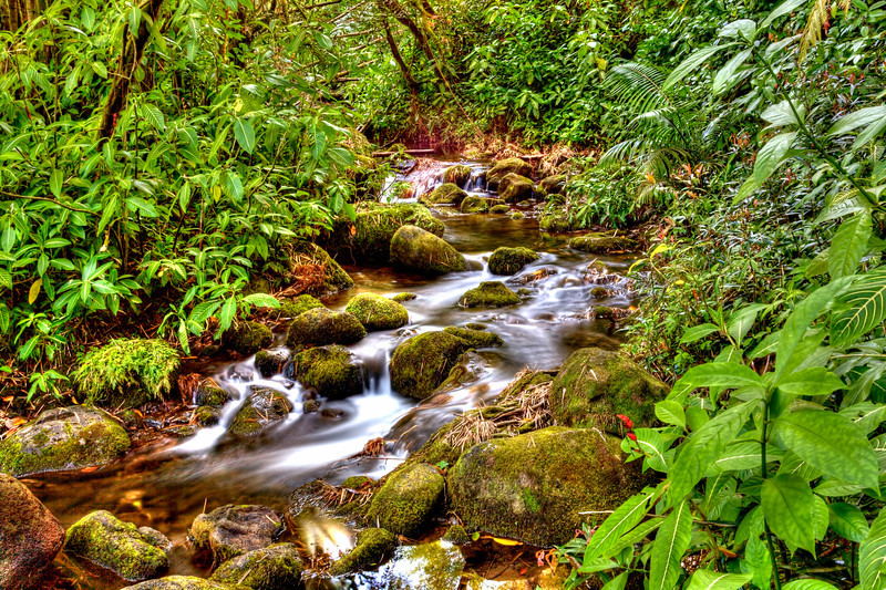 Tropical Brook in Hawaii-Along the loop trail going to Akaka Falls on the Big Island of Hawaii, this small little stream has caught my eye a number of times. You pass over a small bridge and it just catches you. Definitely gives you the feeling of a tropical rain forest. I did a longer exposure to smooth out the water and soften things up a bit. You can almost feel the cool breeze looking at.