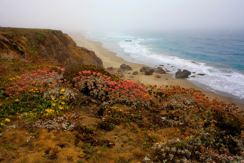 """""""Buy This Photo""""-Foggy Central Coast, California-After spending the night near Point Reyes, California, we drove the next morning to Point Reyes lighthouse. As we approached, the weather turned more and more foggy. When we arrived at the lighthouse we stood looking over the hill into the distance at nothingness, as we were completely fogged in. We never did see the lighthouse. We decided to drive north up the coast and found pure bliss just north of Jenner. As the day past, the fog lifted and an incredible rocky flowery coast beckoned us to spend the day. Which we did!"""