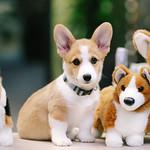 Slow Motion Doggies