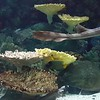Fish at the MN Zoo. Now if I could only loop it and take the kids' voices out of the background.