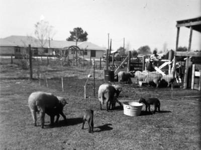 The Farm December 1964  2132 Pech Rd. Spring Branch