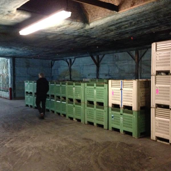 older part of cold storage for more vegetables