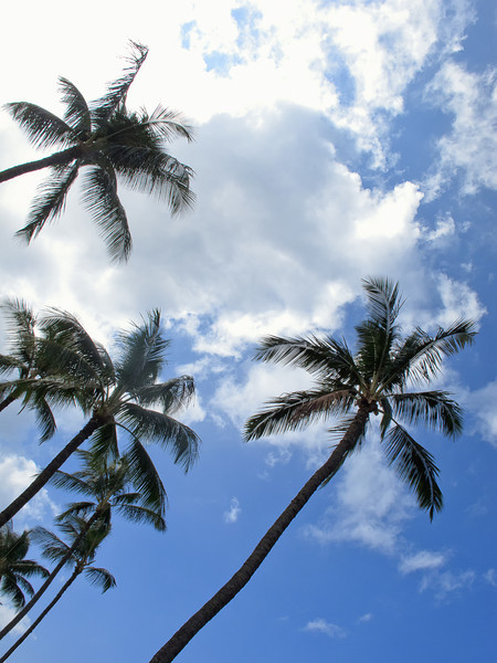 Palm trees overhead.