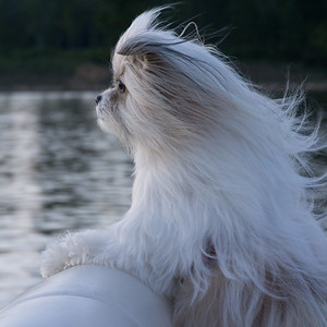 Love this dog. And he loves boat rides.
