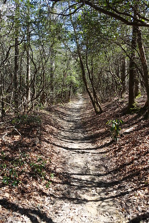 Pink Beds Trail