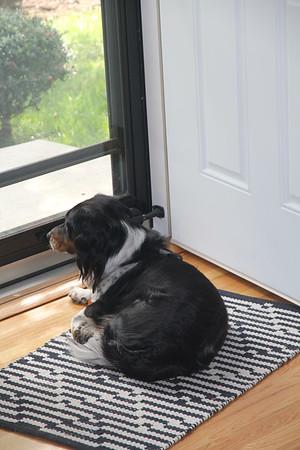 Tex likes the screen door