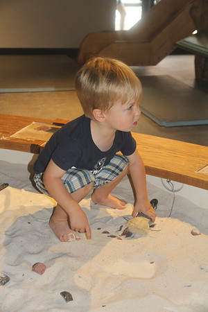 uncovering fossils