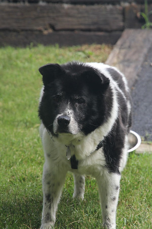 Bessie - about 14 years old