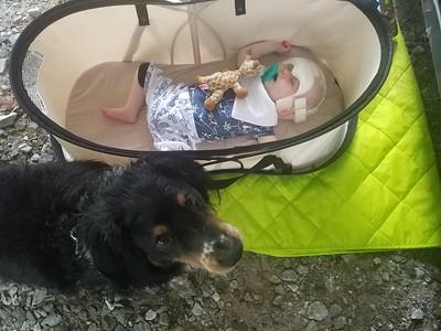 Arlo's personal watchdog
