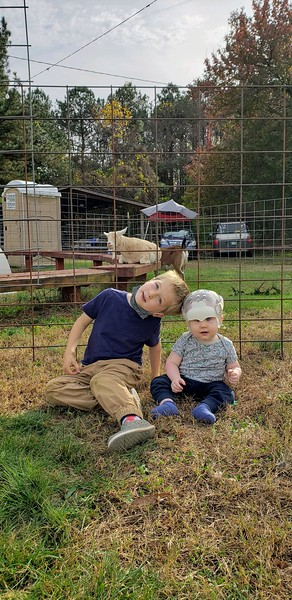 At the tree lot with the goats  11/2020