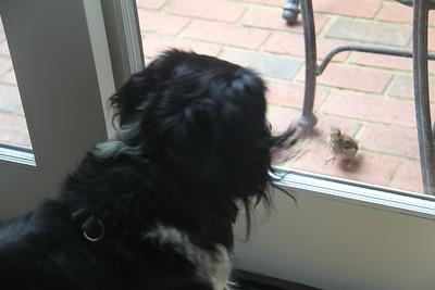 Tex wants that baby bird