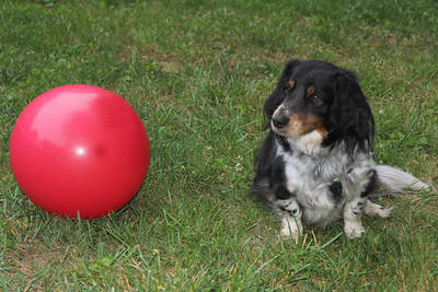 what is Tex supposed to do with such a large ball?