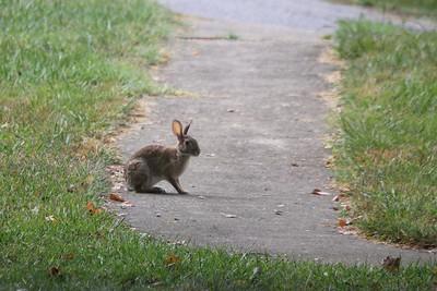 Asheville visitor