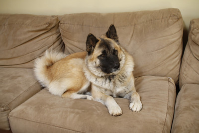 MY sofa!