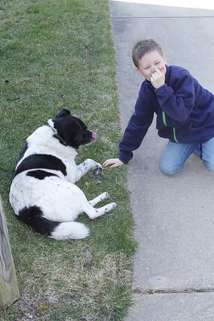 "Aaron said ""Bessie licked my nose"" - then  Bessie licked her own nose!"