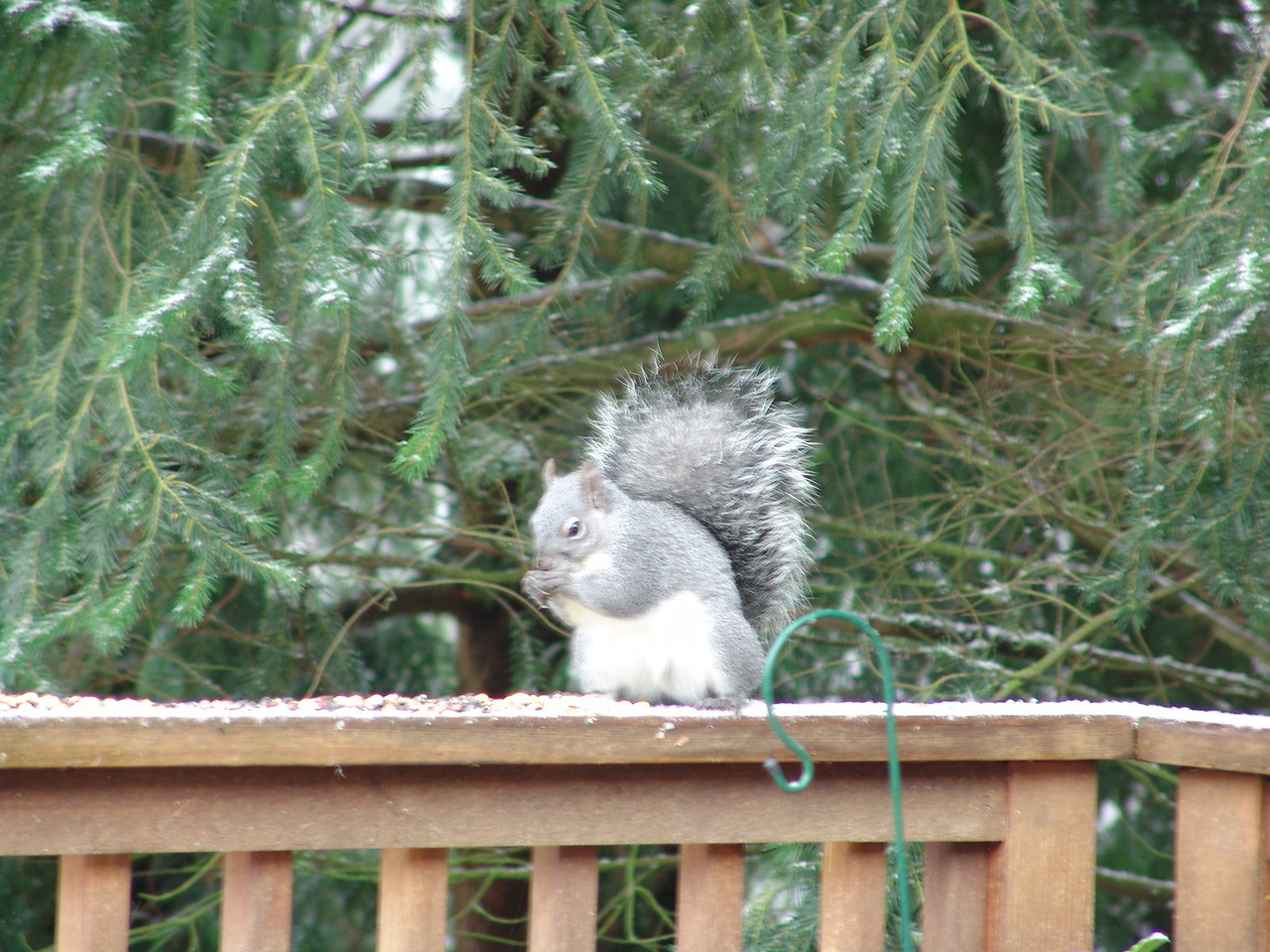 Alvin---a frequent visitor