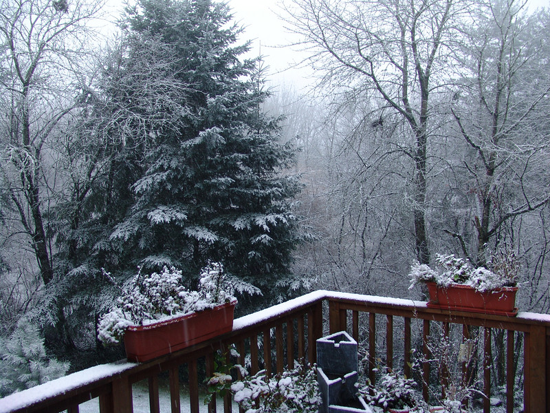 VIEW FROM MY DECK