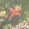 Sea star.photo by Kenzo