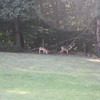 We also saw deer in the back yard.
