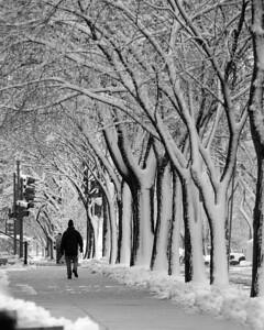 DC snow 0073 8x10bw