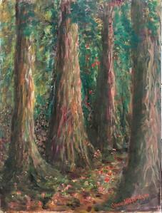 05 Redwood Grove 12 X 16