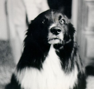 Rocky, True friend of the family,  -1 - Copy