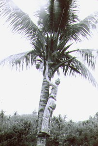 Wayne on Guam 1945, Any one for a coconut