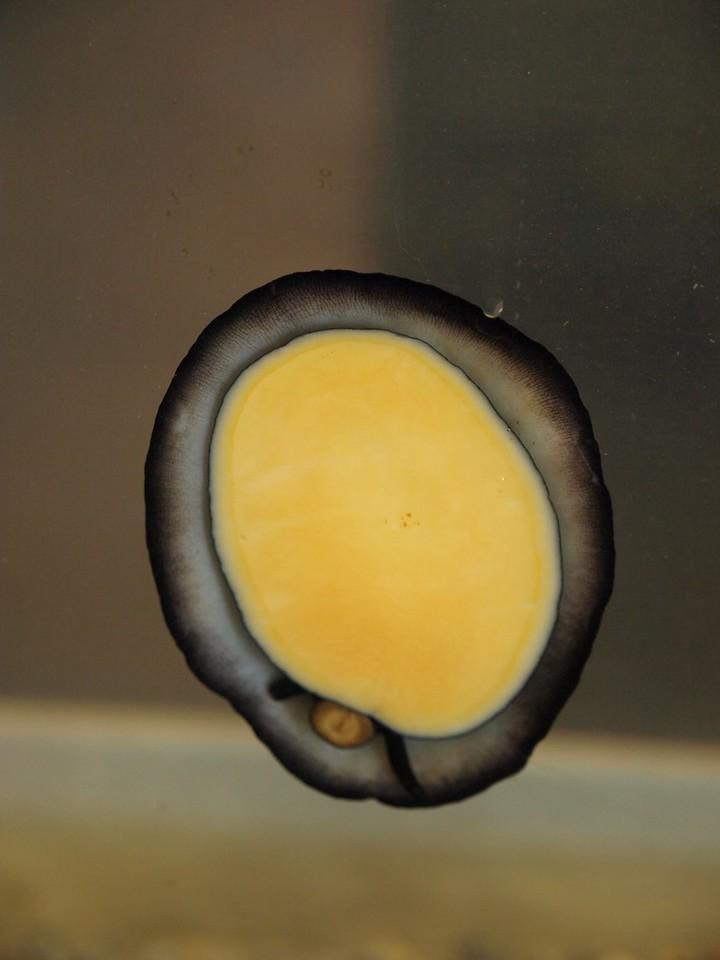 A cool shot of a citton.