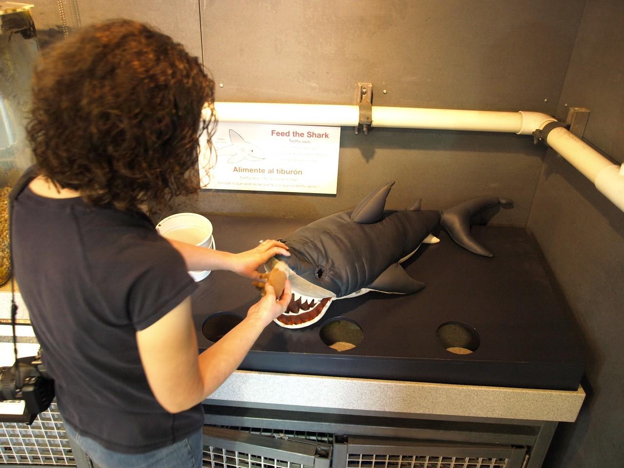 Katie feeds the shark.