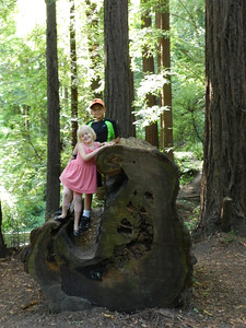 Standing on the remains of a redwood