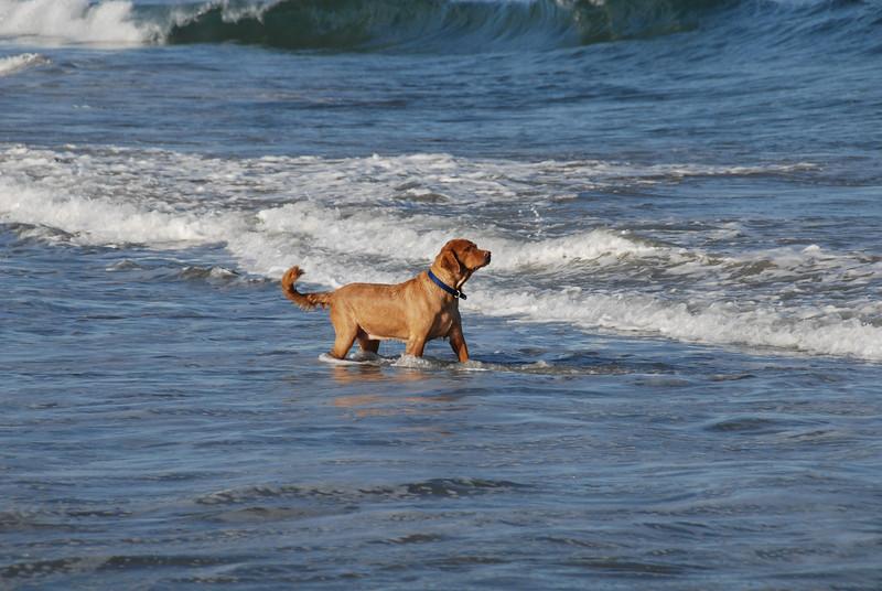 Wells_Beach_2007-017