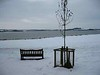 Bench and tree in the snow
