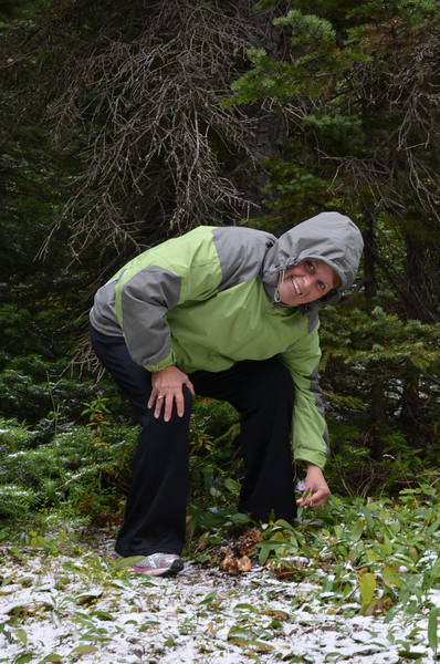Taking time to smell the flowers on our hike around Moraine Lake.  It was snowing just like Christmas - very cool and beautiful. The number, different type, and condition of the flowers was unexpectedly great.