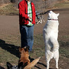 Tundra getting sporty at the dog park in Emigration Canyon.<br /> 11/28/09