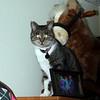 Kitty surveys the proceedings.<br /> 11/27/09