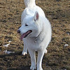 Tundra at the dog park in Emigration Canyon.<br /> 11/28/09