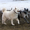 Tundra and Leroy at the dog park in Emigration Canyon.<br /> 11/28/09