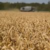 wheat-harvest-1
