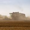 wheat-harvest-3