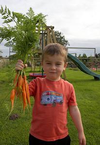 William Autumn Harvest_13