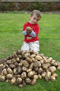 1st Potato Harvest '09 007