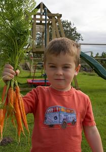 William Autumn Harvest_12