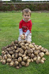 1st Potato Harvest '09 004