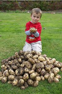 1st Potato Harvest '09 006