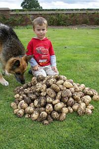 1st Potato Harvest '09 001