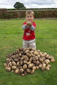 1st Potato Harvest '09 003