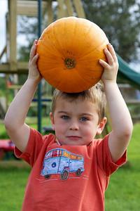 William Autumn Harvest_05