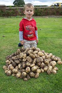 1st Potato Harvest '09 002